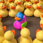 Unique Website concept with ducks